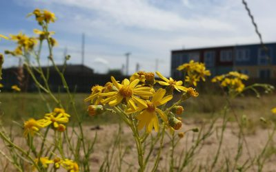 A Rhizome Flower (feat. Sabrina Calvo)